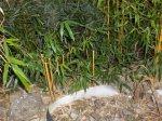 Bambussanierung02.jpg